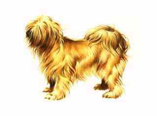 Dog Grooming Pinetop Az